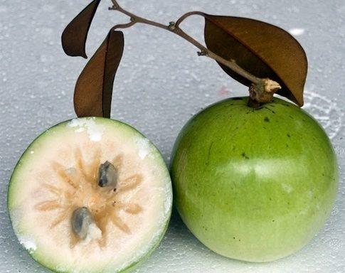Milk Fruits / Vu Sua