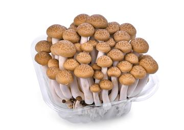 Mushroom Brown  Shimeji 150 gr