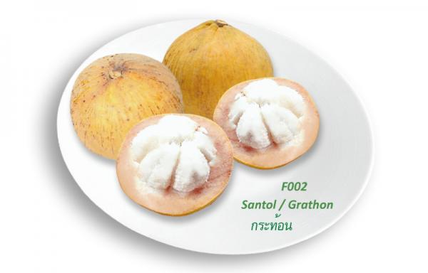 Santol / Grathon / กระท้อน