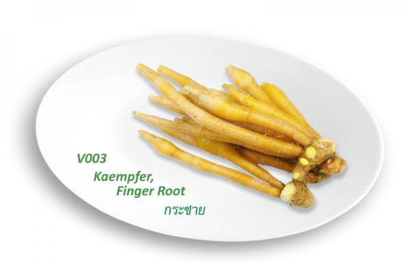 Kaempfer Finger Root / กระชาย