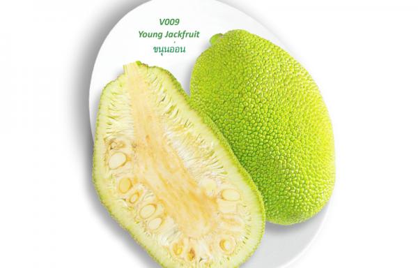 Young Jackfruit / ขนุนอ่อน