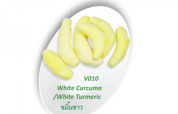White Turmeric / ขมิ้นขาว