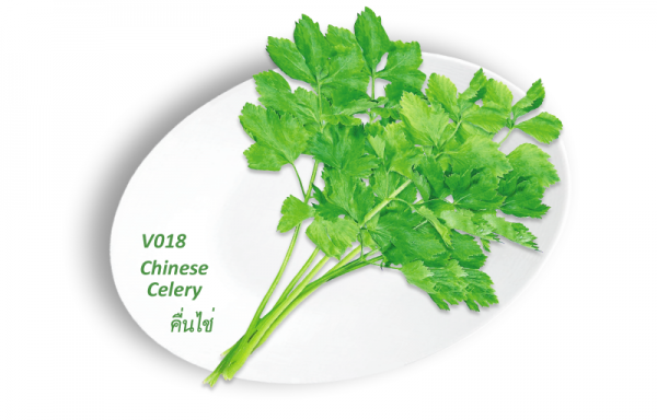 Chinese Celery / คื่นไช่