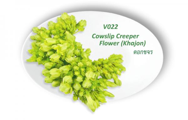 Cowlip Creeper Flower (Khajon) / ดอกขจร