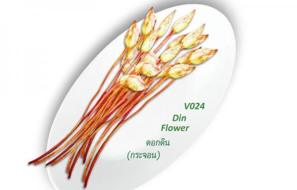 Din Flower / ดอกดิน (กระจอน)