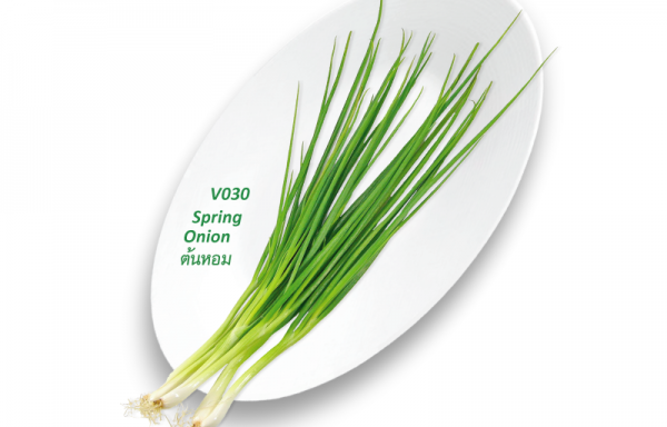 Spring Onion / ต้นหอม