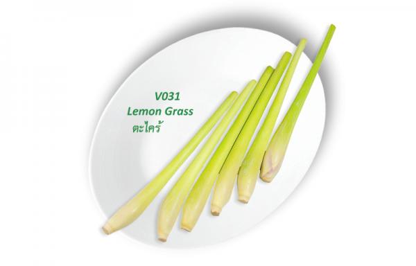 Lemon Grass / ตะไคร้