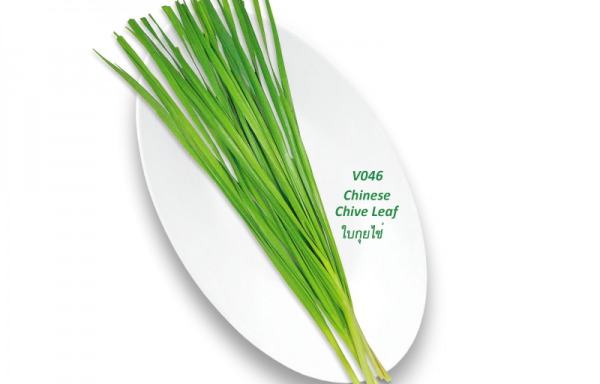 Chinese Chive Leaf / ใบกุยไช่
