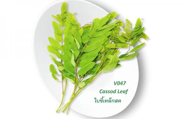 Cassod Leaf / ใบขี้เหล็กสด
