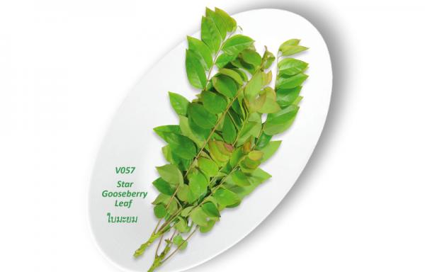 Star Gooseberry Leaf / ใบมะยม