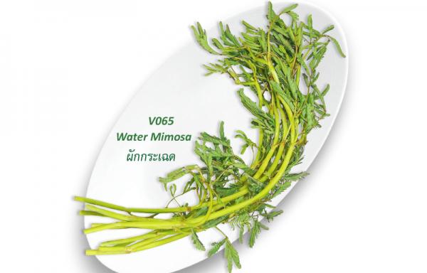Water Mimosa / ผักกระเฉด
