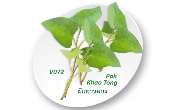 Khoo Tong / Rau dap ca / ผักคาวทอง