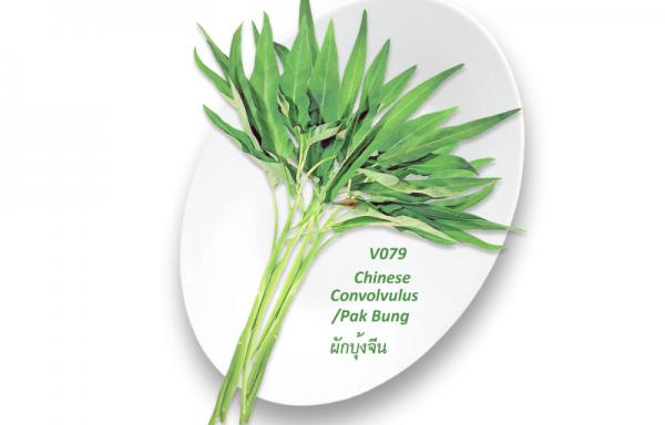 Chinese Convolvulus / Rau Muong / ผักบุ้งจีน