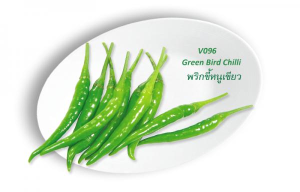 Green bird Chilli / พริกขี้หนูเขียว