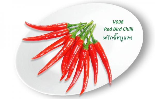 Red Bird Chilli / พริกขี้หนูแดง