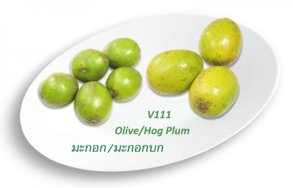 Olive / Hog Plum / มะกอก / มะกอกบก