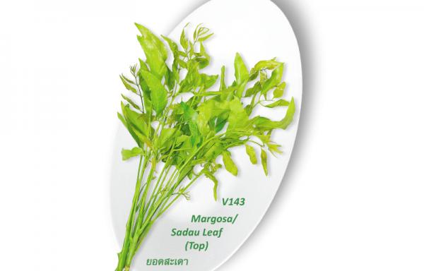 Margosa / Sadau Leaf (Top) / ยอดสะเดา