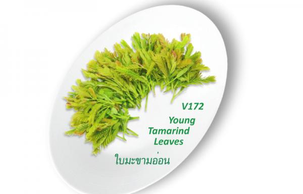 Young Tomarind Leaves / ใบมะขามอ่อน