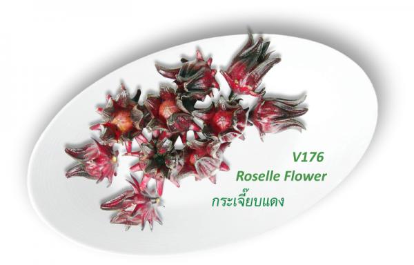 Roselle Flower / กระเจี๊ยบแดง