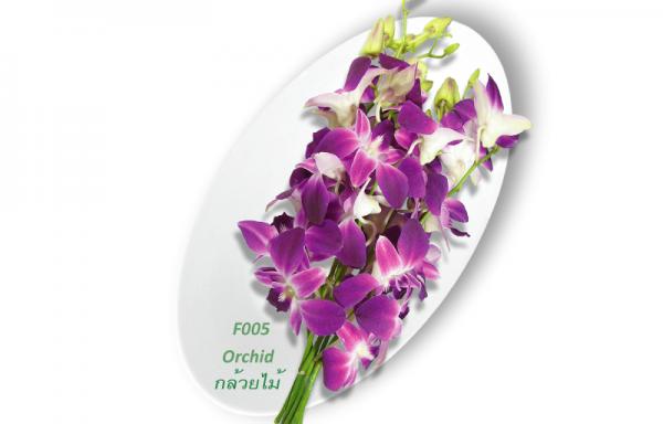 Orchid / กล้วยไม้