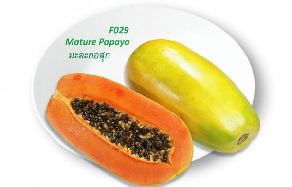 Mature Papaya / มะละกอสุก