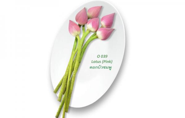 Lotus (Pink) / ดอกบัวชมพู