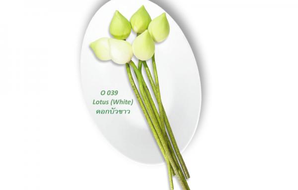 Lotus (White) / ดอกบัวขาว